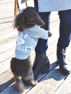 UCLA   DOG WEAR ( DOG用 )クルースエット
